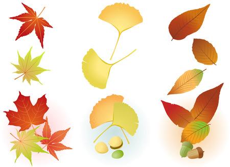 Fall Leaf(Maple,Ginkgo,Acorn) Vector