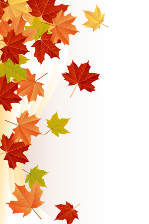 yellow leaves: Maple Leaves