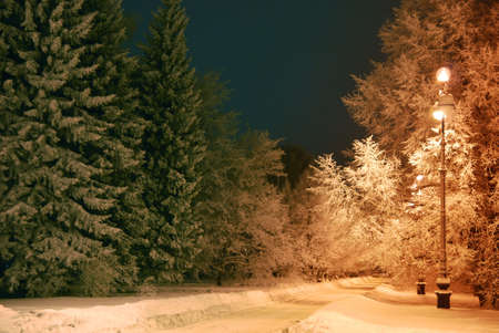 dark night, trees covered with snow  Stock Photo