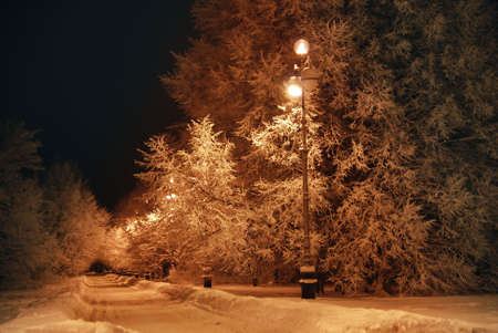 dark night, trees covered with snow  photo