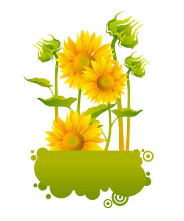 beautiful yellow Sunflowers Stock Vector - 9159842