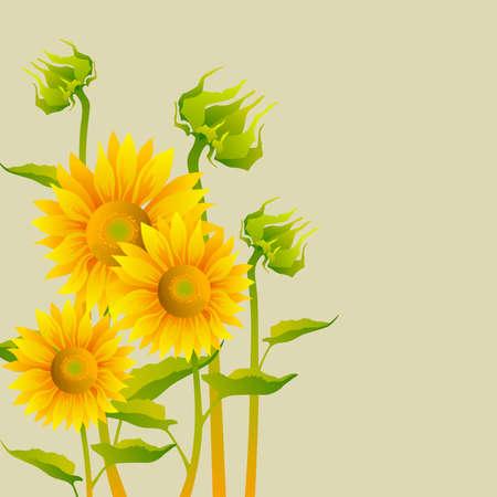 leaf close up: beautiful yellow Sunflowers