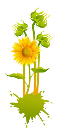 beautiful yellow Sunflowers Stock Vector - 9159840