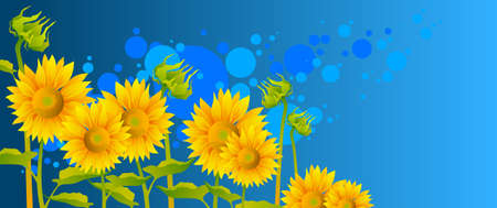 flowers close up: beautiful sunflowers with blue sky Illustration