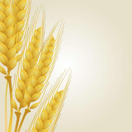 avena: El trigo sobre fondo claro