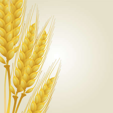 Wheat on light background Stock Vector - 10659668