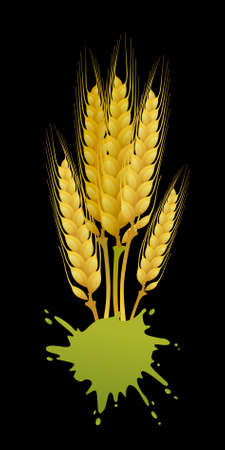 Wheat on black background Vector