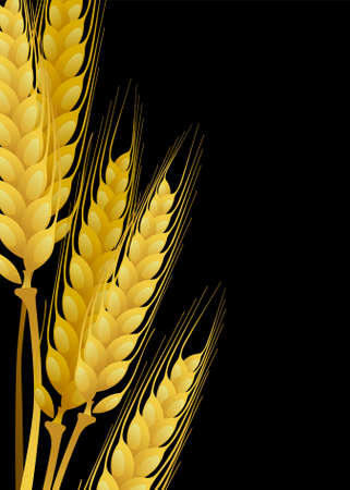 whole grain: Wheat on black background
