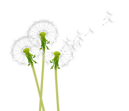 Dandelions in the wind Vector