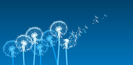 blowing of the wind: White dandelions on blue background Illustration
