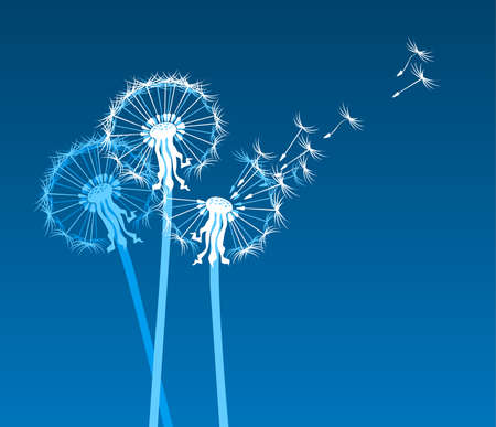 white dandelions on blue background Vector