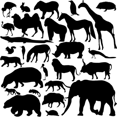 animals collection: animals collection Illustration