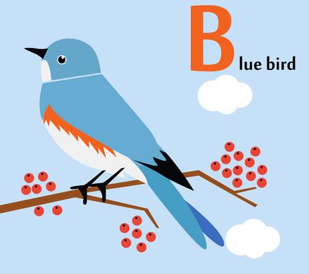 Animal alphabet for the kids  B for the Blue bird