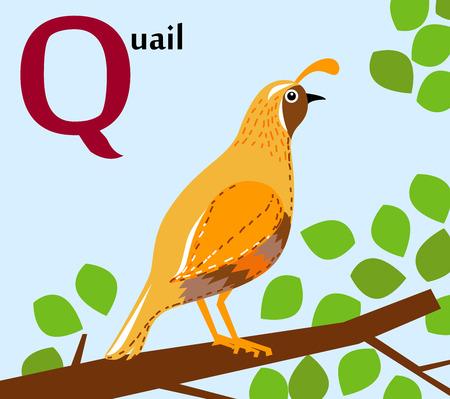 Alfabeto de animales para la Q de niños para la codorniz Ilustración de vector
