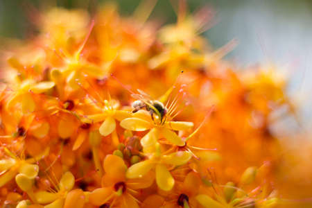 Flowers orange,background