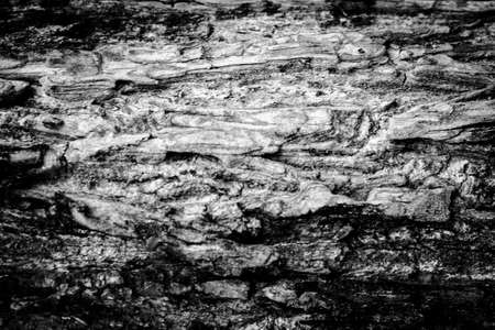 aging: Tree bark texture background