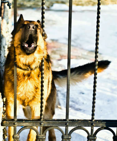 fence: Dog behind the fence