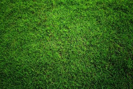 play golf: Green grass background.