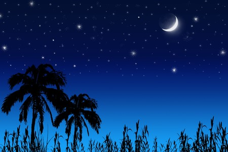 satellite view: Coconut tree , moon and stars.