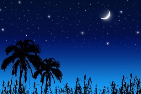 astronomie: Kokosnussbaum, Mond und Sterne.