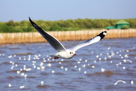 A photo of a flying seagull. Stock Photo - 10926656