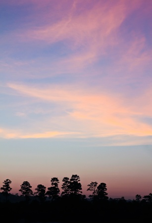 Colourful Sky and Forest Silhouette at Sunset.
