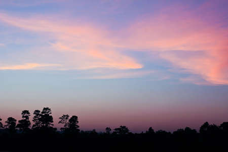 Colourful Sky and Forest Silhouette at Sunset. photo