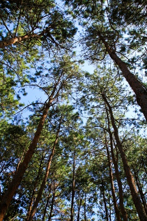 treetops: Spring forest treetops. Stock Photo
