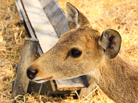 Portrait of a young deer. Stock Photo - 12847970