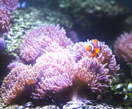 Coral Reef and Tropical Fish in an aquarium.