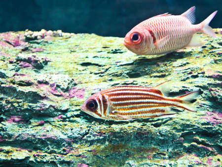 A photo of tropical fish in an aquarium.
