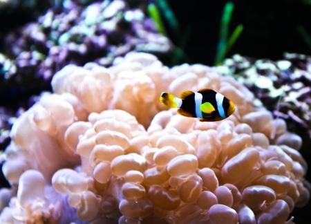 Coral Reef and Tropical Fish in an aquarium.