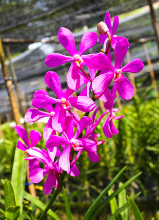 Beautiful violet orchid in garden Stock Photo - 17474519