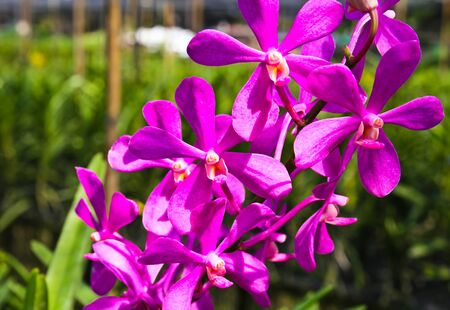 Beautiful violet orchid in garden Stock Photo - 17474555