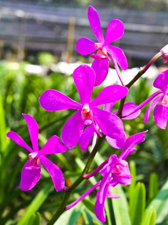 Beautiful violet orchid in garden Stock Photo - 17474550