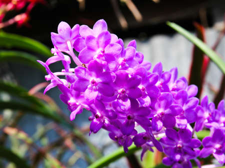 Beautiful orchid in garden Stock Photo - 17474536