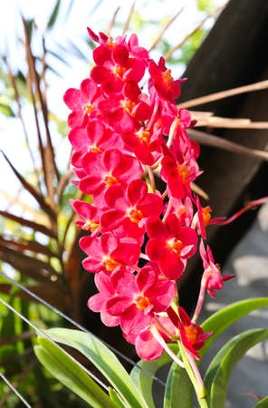 Beautiful orchid in garden Stock Photo - 17474516