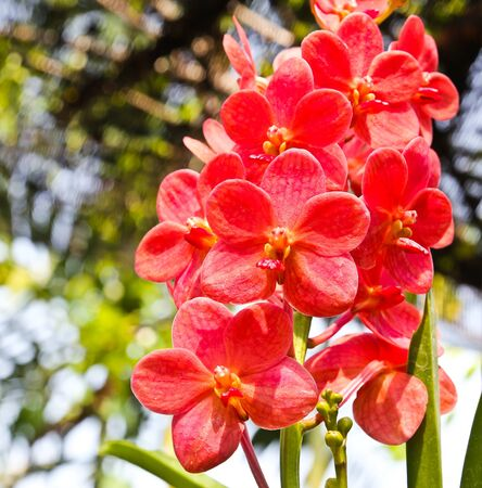 Beautiful orchid in garden Stock Photo - 17474522