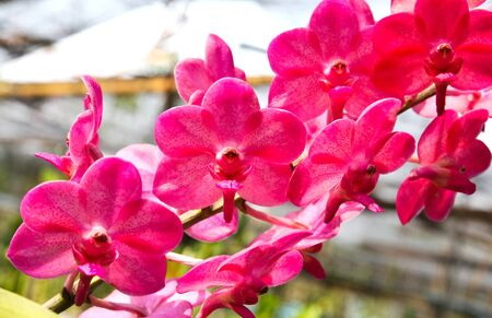 Beautiful orchid in garden Stock Photo - 17474526