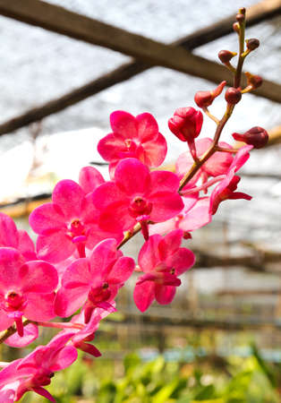 Beautiful orchid in garden Stock Photo - 17474552