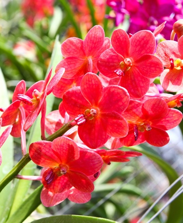 Beautiful orchid in garden Stock Photo - 17474556