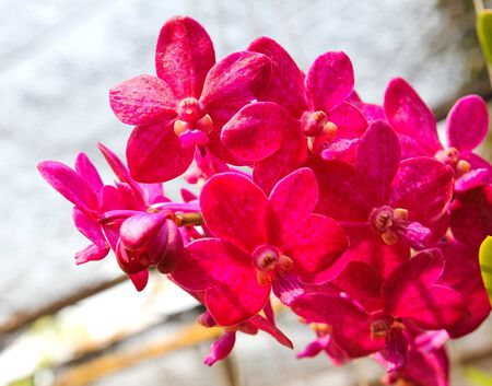 Beautiful orchid in garden Stock Photo - 17474505