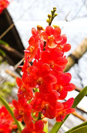 Belle orchid?e dans le jardin Banque d'images