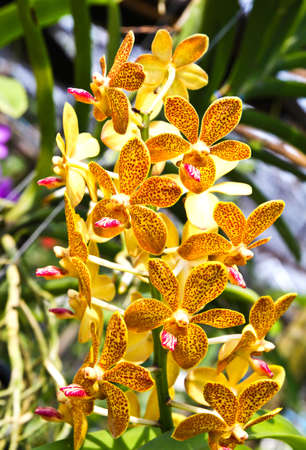 Beautiful orchid in garden Stock Photo - 17474557