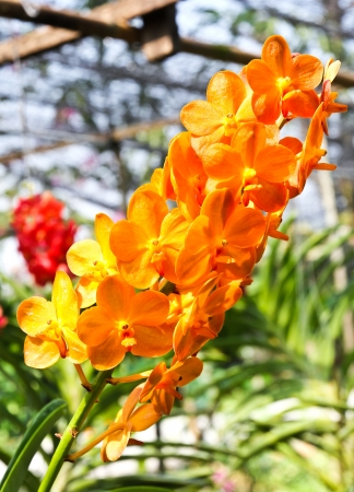 Beautiful orchid in garden Stock Photo - 17474548