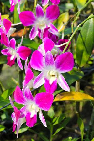 Belle orchid�e dans le jardin