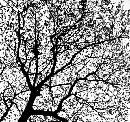 Treetops in black and white tone photo