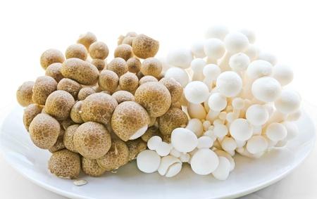 Close up of an assortment of mushrooms