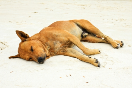 Sleeping dog on sand beach photo