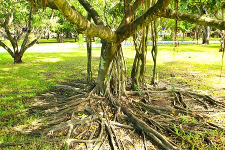 Root of the tree. photo